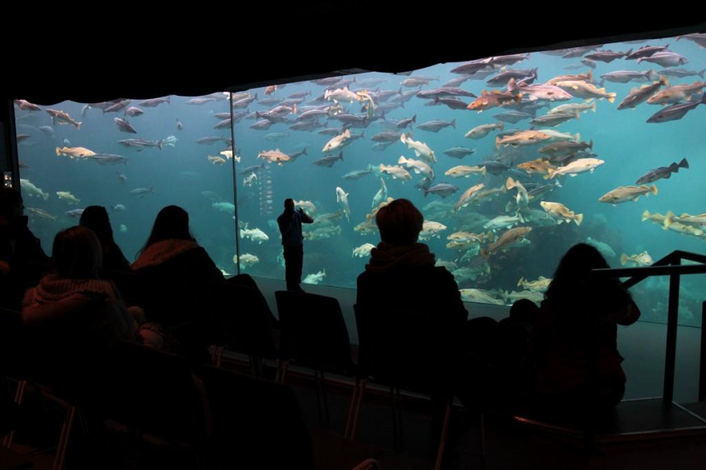 Größtes Aquarium im Atlanterhavsparken