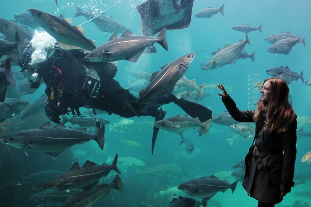 Fotoshooting mit Taucher und fotogenen Fischen